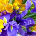 Why Use Online Method To Buy Summer Flowers From The Cults Florists?