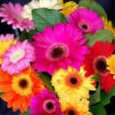 You Can Easily Get Florists Cults To Send Autumn Flowers To Your Loved One