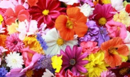 Advantages of choosing Florists Cults